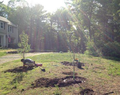 Ochard planting 2