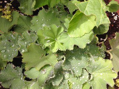 Dewdrops 2