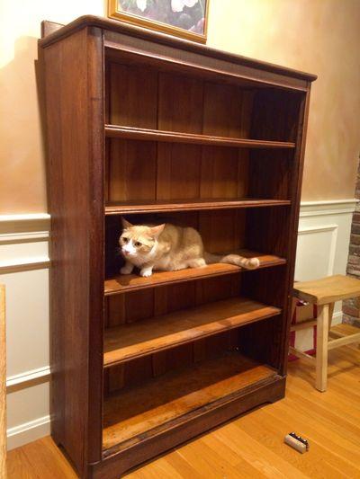 New bookcase