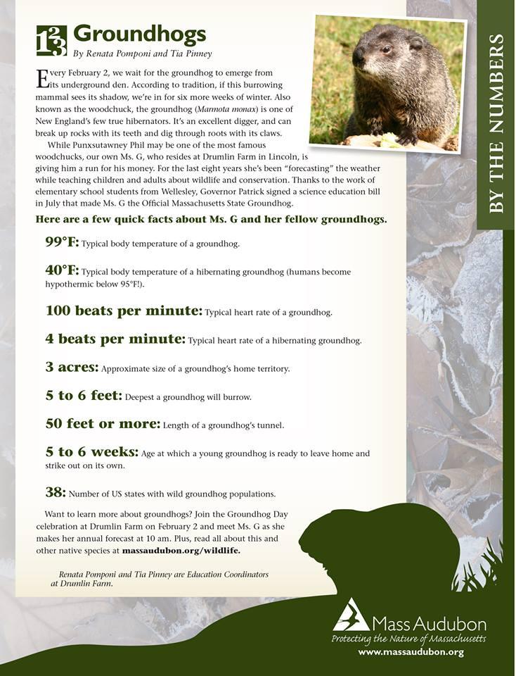 Groundhog info