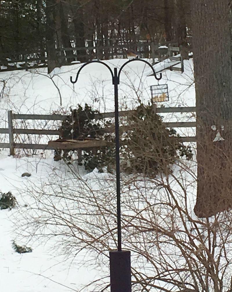 Bluebird feeder 1