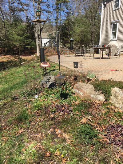 Spring yard 7