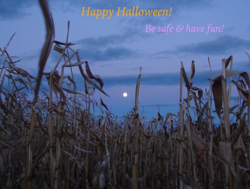 Happy halloween greeting (cornfield)