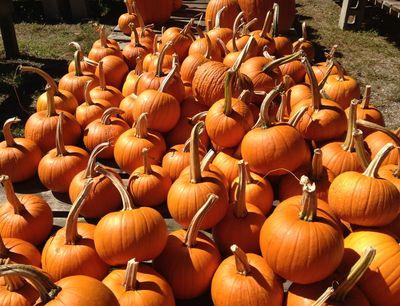 Pumpkin days 3