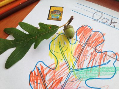 Acorn oak coloring page