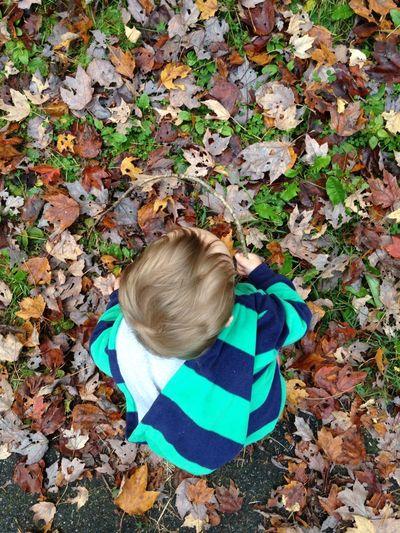 Leafy day 4