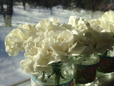 Carnation day 1
