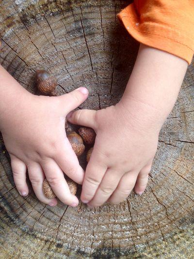 Acorns hands