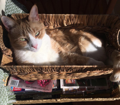 Archie in basket