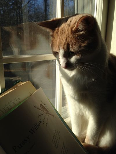 Oliver in sunny window 1
