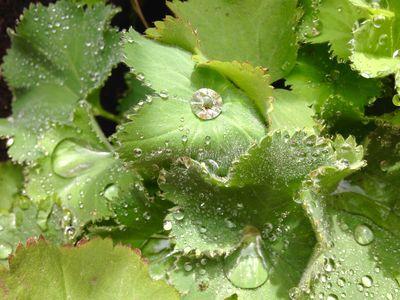 Dewdrops 1