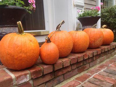Pumpkins from matt