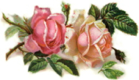 Romantic-pink-roses