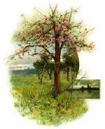 Blossomtree_2