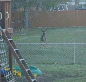 Deermorning1
