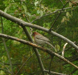 Springbird3