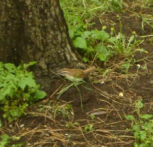 Springbird4