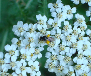 Beewithpollen