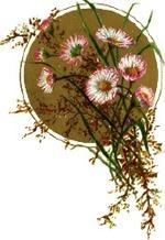 Daisycircle