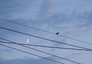 Moonbird1