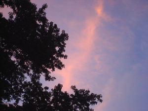 Pinkmorn