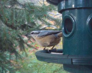 Winterbird2