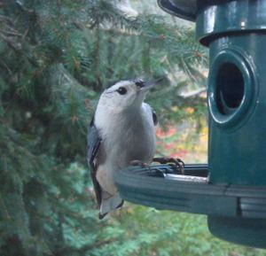 Winterbird5