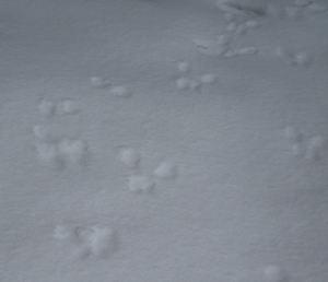 Snowpics10