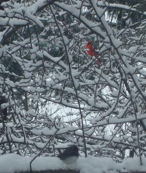 Snowpics5