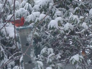 Snowpics7