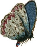 Bluebutterfly_3