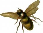 Flyingbee