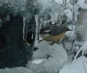 Snowstorm9