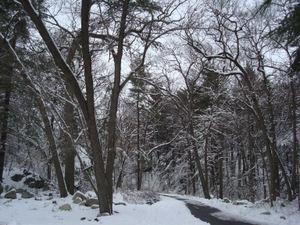 Snowywoods1