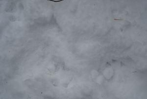 Snowywoods7