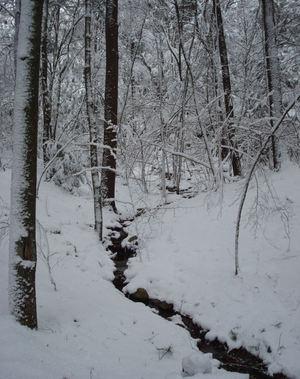 Snowywoods9