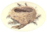 Nest1_2