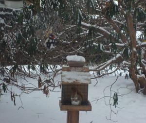 Snowmorn2