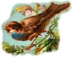 Birdsinging_2