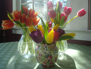Eastersun11_2