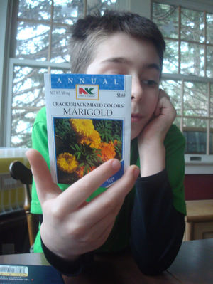 Marigolds9