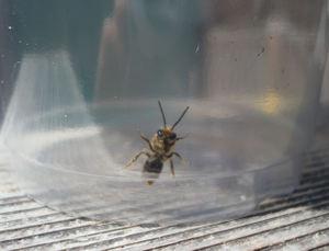 Ladybugs10