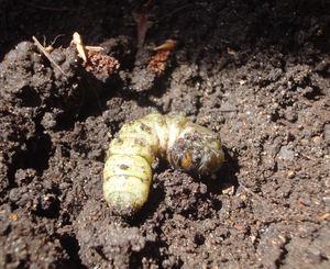 Boysbugs3