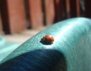 Boysbugs6