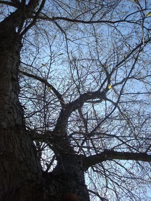 Naturenut11