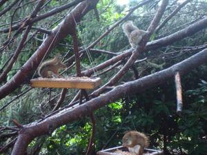 Squirrels2