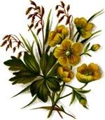 Yellowwildflower