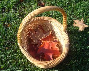 Leavesweek