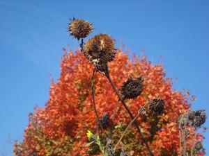 Fall12