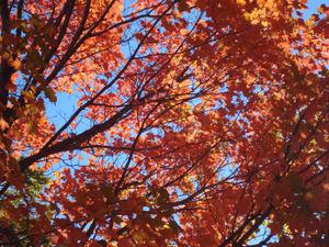 Fall17